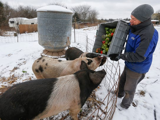 Bret Gaertner feeds the pigs some peppers on a snowy