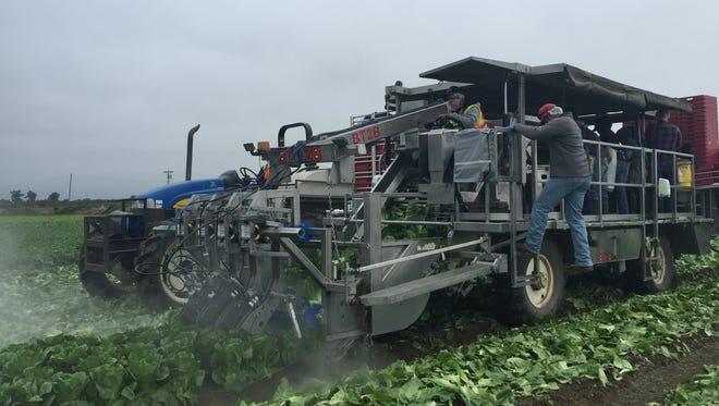Taylor Farms is stepping up its automated technologies to increase efficiency and attract younger workers.
