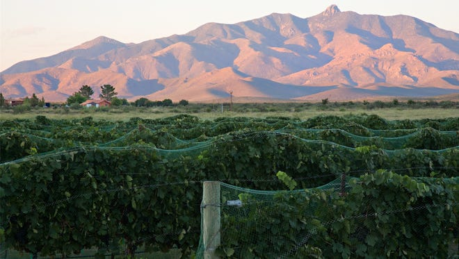 The view from the vineyards at Pillsbury Wine Co. southeast of Willcox.