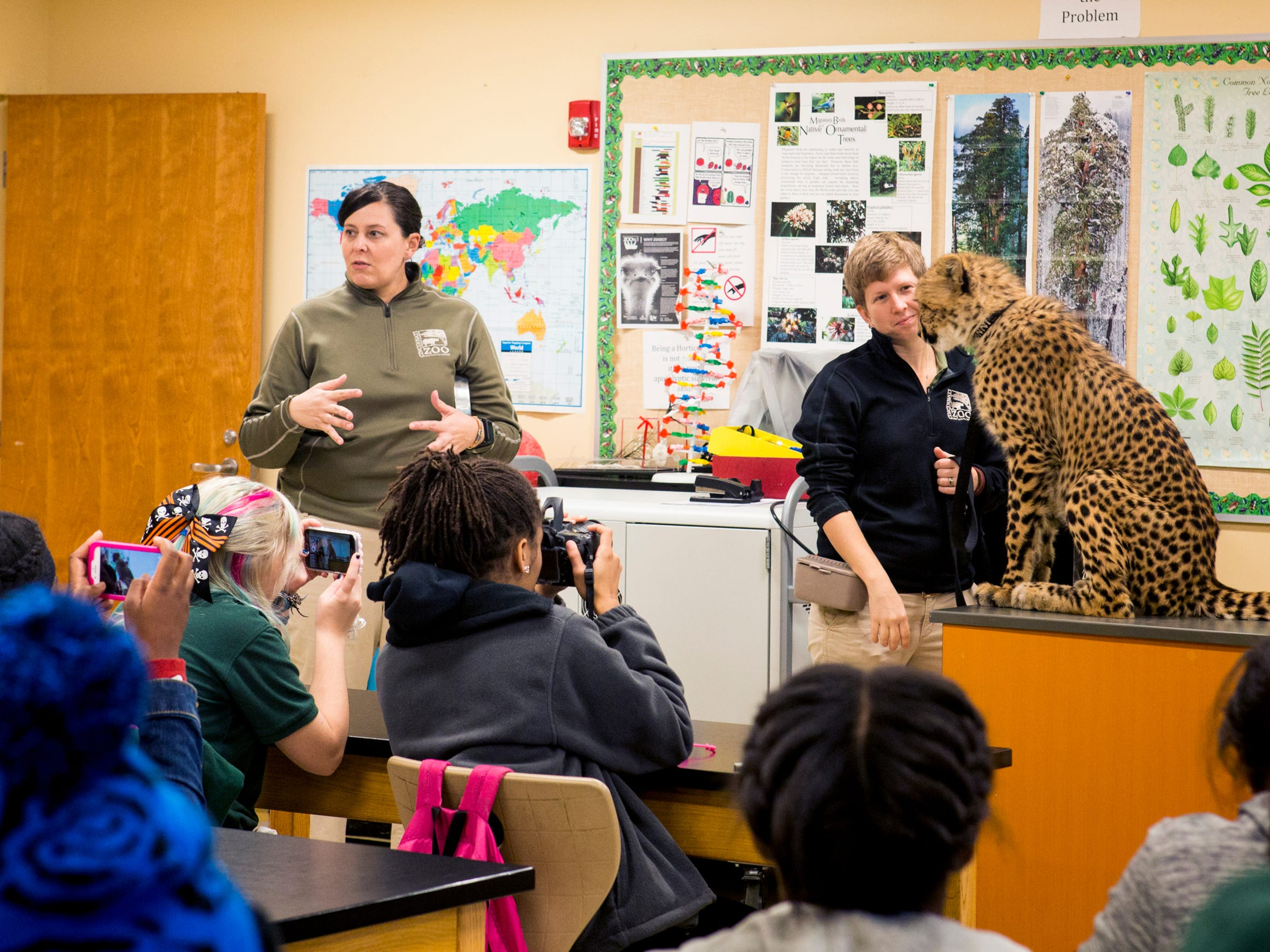 Cincinnati Zoo Academy students take photos of Donni as Cat Ambassador trainers Linda Castaneda and Alicia Sampson talk about Donni's training as a Cat Ambassador Wednesday, October 26, 2016 at the Cincinnati Zoo and Botanical Garden.