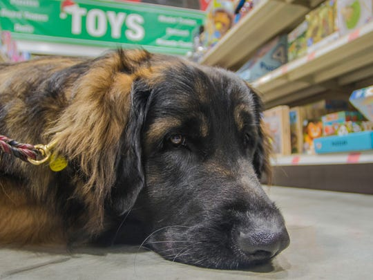 A dog named Arlo lays in an aisle at Menards while shopping with owners Julia and Steven Roberts for the Toys for Tots program on Tuesday, Dec. 19, 2017.