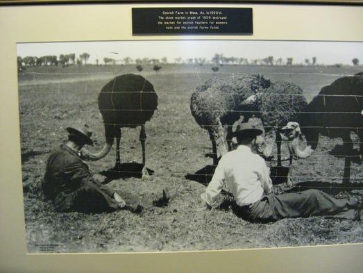 A photo at The Landmark Restaurant features an ostrich
