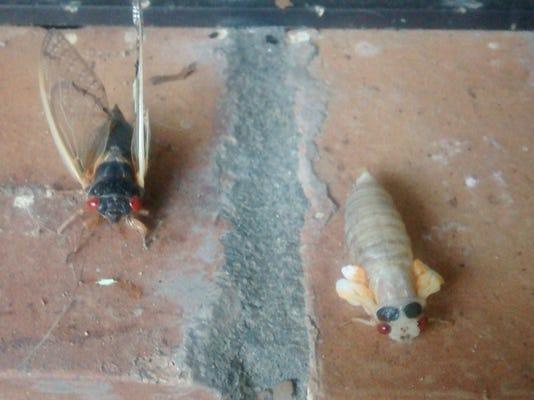 Cicadas MAIN PHOTO
