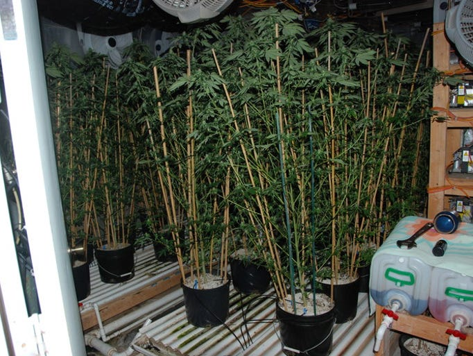 The Cape Coral Police Department discovered more than $175,000 worth in marijuana at a residence NW 33rd Terrace Thursday night. Two people were arrested on drug trafficking charges.