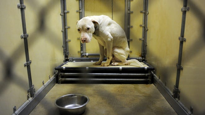A male pit bull has a long road to healing, both physical and mentally, at the Ross County Humane Society. A bill was introduced in Ohio this week to make animal cruelty a felony.