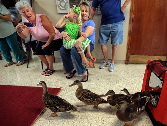 Visitors watch as Peabody Duckmaster and local historian