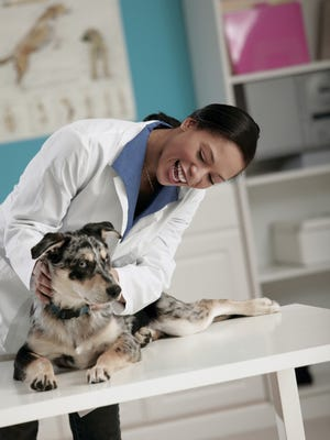 Get a free spay or neuter for your pet through the Arizona Humane Society.