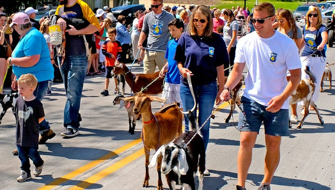 Goats of all sizes and colors begin their march down State 42 at last year's Roofing of the Goats Parade in Sister Bay.