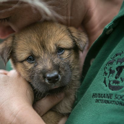 Elmbrook Humane Society, HAWS among animal shelters helping 149 dogs rescued from Korean meat farm