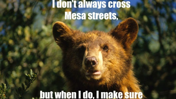 Based on the coverage, Mesa's black bear is nearing