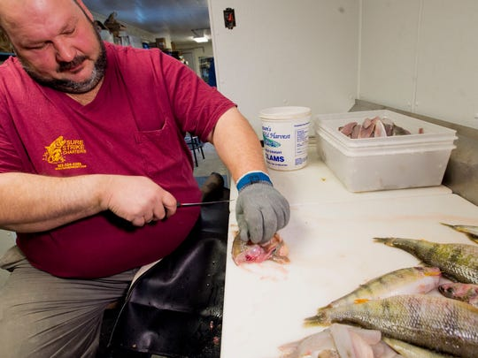 Paul Dunkling fillets yellow perch, processing a sizable haul brought in from the waters of Lake Champlain to Ray's Seafood in Burlington. Dunkling is upset federal money to kill cormorants in Vermont has been slashed. Dunkling says the birds eat too many of the lake's fish.