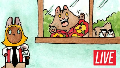 Breaking Cat News comic strip launches