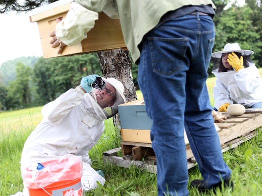 Department of Agriculture inspector Isaac Stapleton examines the honeybee hives of Dena Rash Guzman and Erik Guzman in Sandy after they have recently suffered mass bee die off.