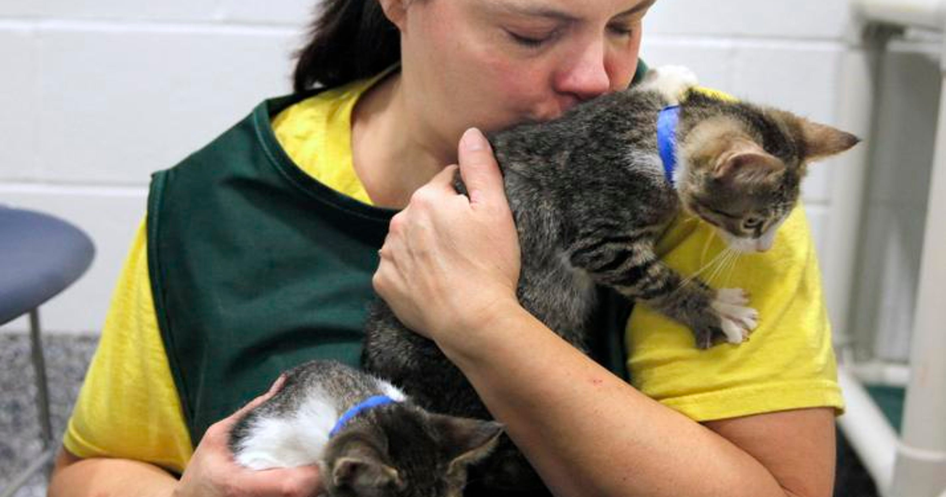 Lollypop cat adoptions free — for now