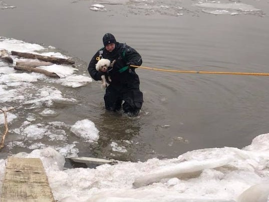 Piermont dog rescue