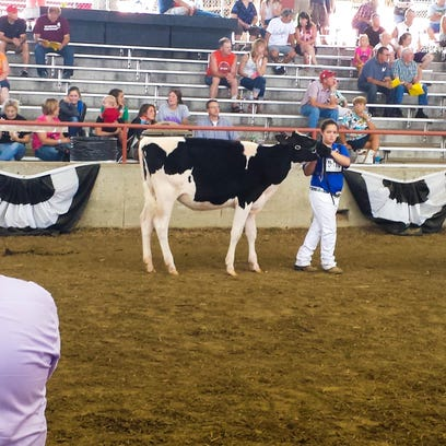 Sheboygan County's Savanna Ridge, 13, showed a calf at the State Fair this year. Pictured, she receives an award from Cierra Ehrke-Essock, the Wisconsin Holstein Princess.