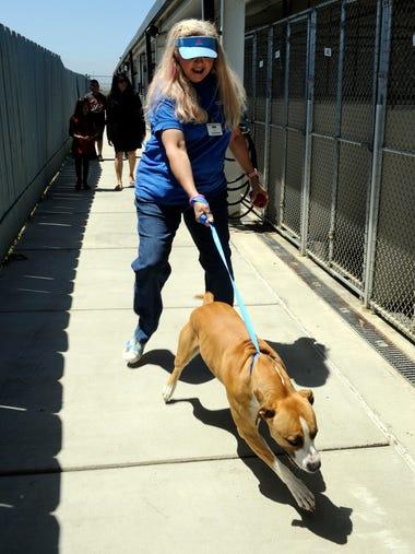 Volunteer Karen Filice takes a dog to an exercise yard