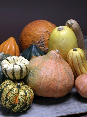 Winter squash are best picked before the first frost but not too early as they continue to receive sugars as long as the vine still has green leaves and the stem is still green.