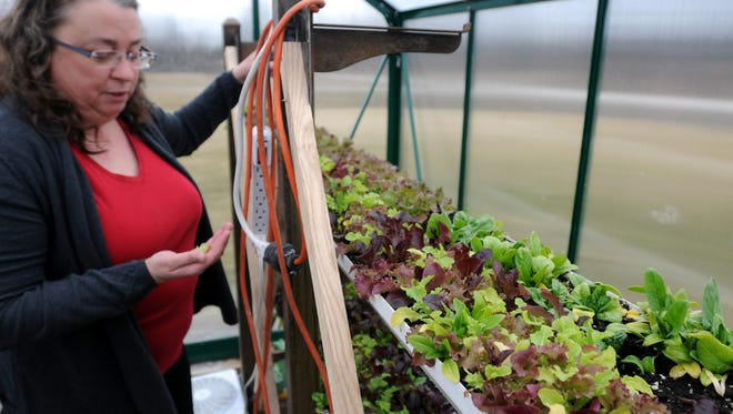 Lettuce grows in a greenhouse at Dancing Meadows Homestead farm in Cottrellville Township in this Times Herald file photo. The farm was one of 15 agricultural businesses in St. Clair County and Sanilac County to receive funding to help mitigate the risk of COVID-19.