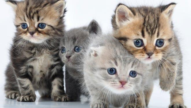 Stock image of kittens