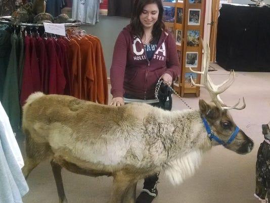 Reindeer_cropped.jpg