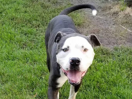 This dog, Joker, was rescued by AHeinz57 Pet Rescue