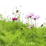 Allergies can lead to stress, discomfort