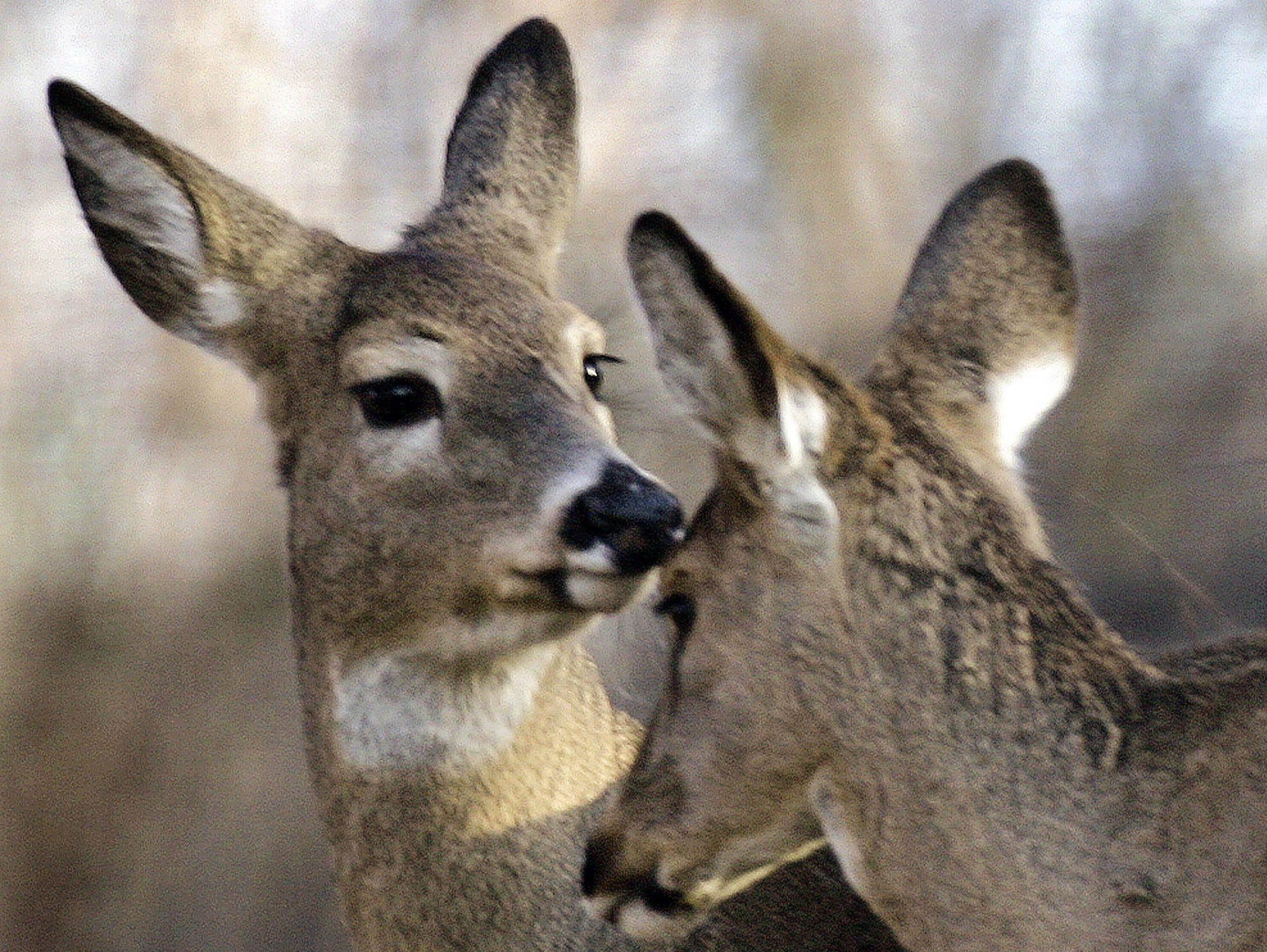 Chronic wasting disease is a threat to the Michigan