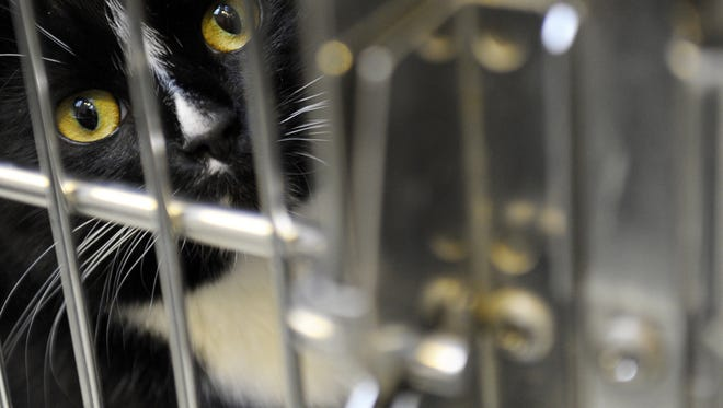Green Bay Animal Rescue will host an open house Saturday for its new Chris Dantoin Memorial Cat Haven.