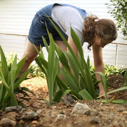 Mary Johnston places cedar mulch among plants in her