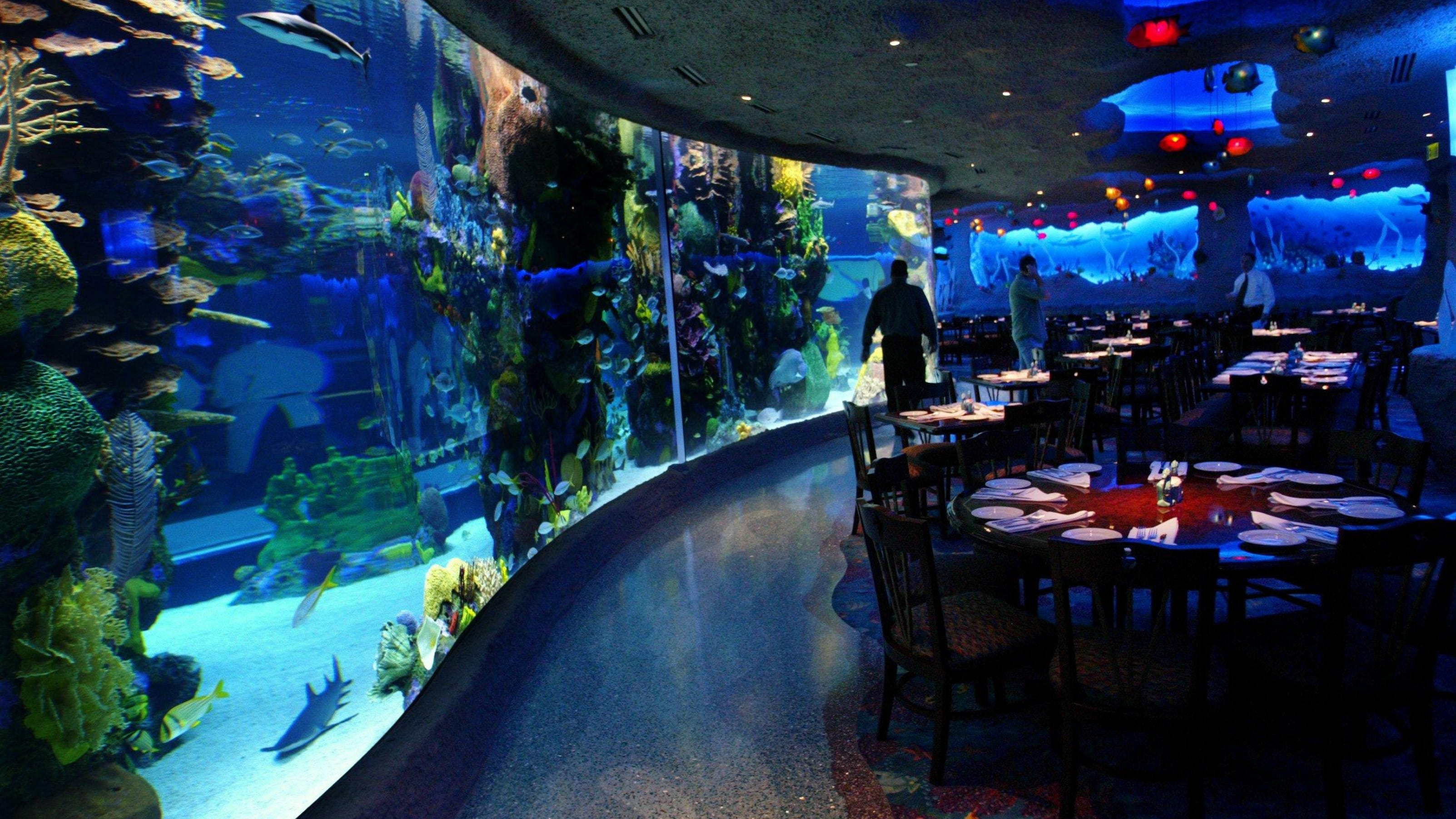 Kristen Kindoll Aquarium Staffers Bond With Animals