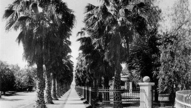 """A 1930 photograph of Palm Walk shows """"teenage"""" Mexican Fan Palms planted about a decade earlier. Normal Avenue before it was closed to traffic is at left in this view looking south."""