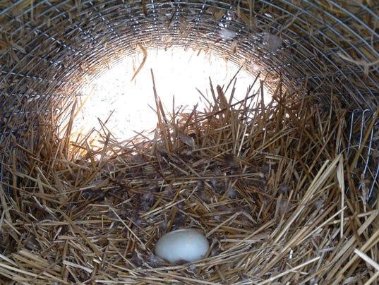 636228860838931244-LDN-TF-021917-duck-egg.jpg