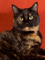 Takari is available for adoption at 952 W. Melody Ave.