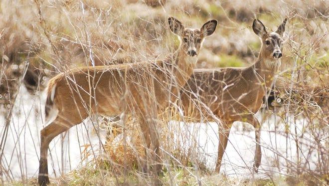 Hunters harvested more than 188,000 deer