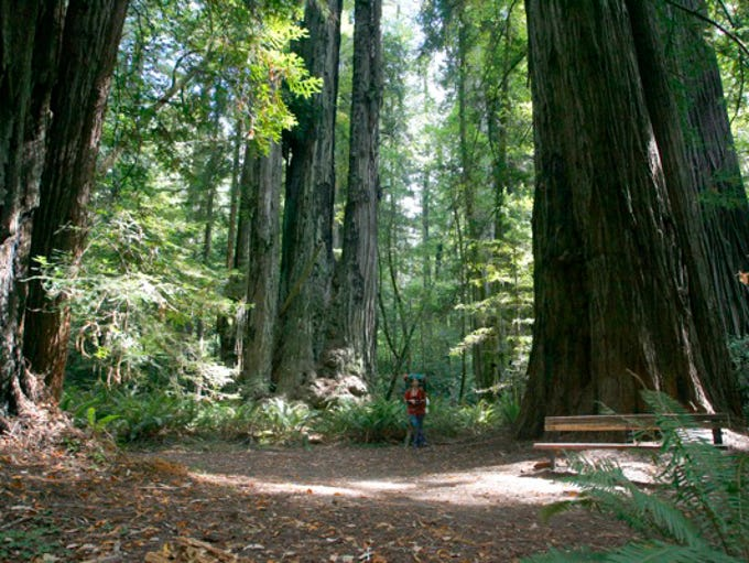 Tall Trees Grove is a short 4 mile round-trip hike.