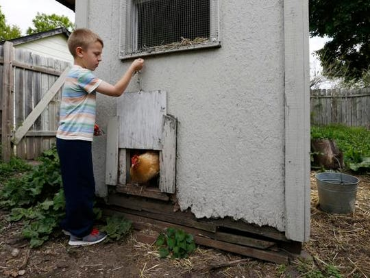 Raphael, 7, raises up the door to let the family chickens