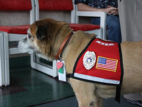 Precious, the fire dog, visits during the 2nd annual Chili, Brats, & Brew at the Vintage Fire Museum and Safety Education Center in Jeffersonville on Saturday.