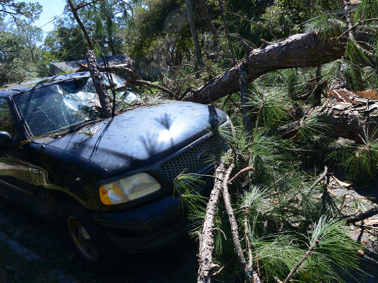 Hurricane Matthew downed trees in several Southeastern states.
