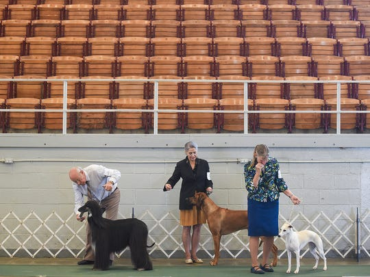 Owners get their dogs ready for a judging competition