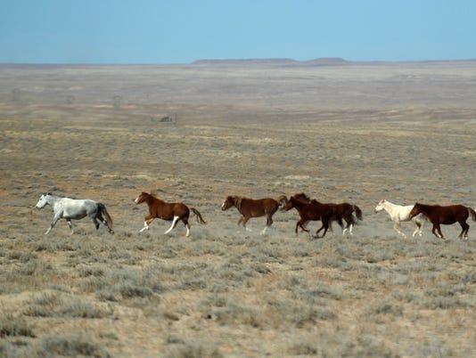 FMN-HORSES-0227-3.jpg