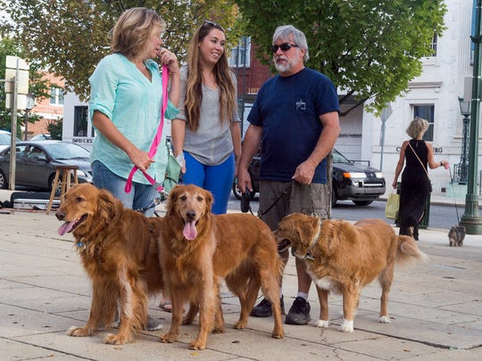 Amy Trione, left, Olivia Trione, center, and Nick Trione walk their three golden retrievers downtown during this month's Fido's First Friday  on Sept. 2, 2016. The Downtown Business Council and Council of the Arts teamed up to create Fido's First Friday for the month of September.