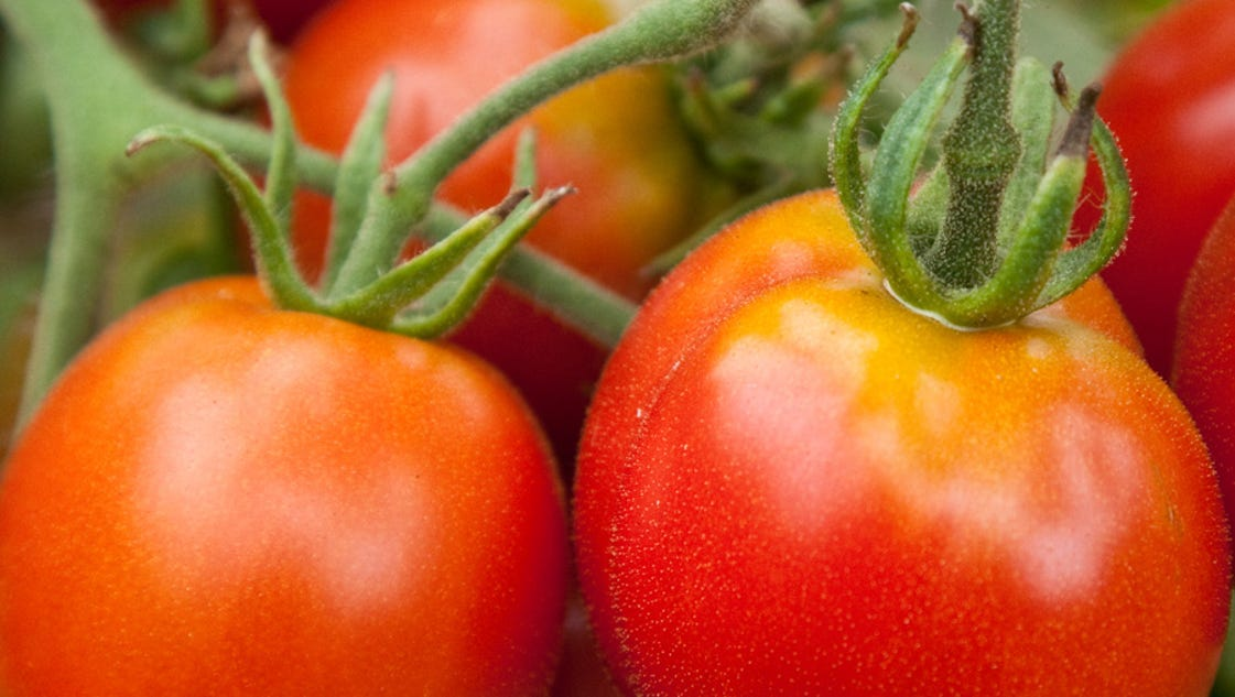 Tricks For Getting Healthy Tomatoes Early