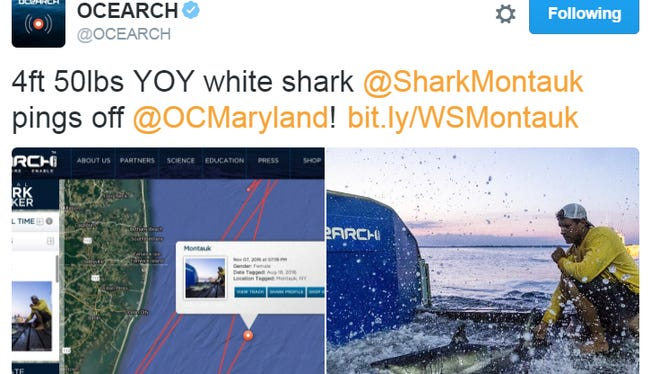 Montauk the great white shark has been visiting Delmarva and pinged off Ocean City on Nov. 7.