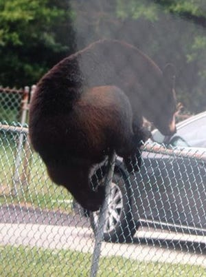 This photo of the elusive South Jersey bear was captured in Waterford Wednesday. The bear itself, however, has yet to be captured.