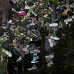 Take a look at Indiana's legendary shoe tree