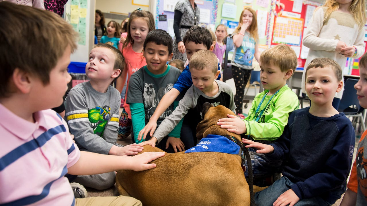 Ozzie, a 3-year-old therapy dog, stops by Park Hills Elementary School to help students practice their readings skills.