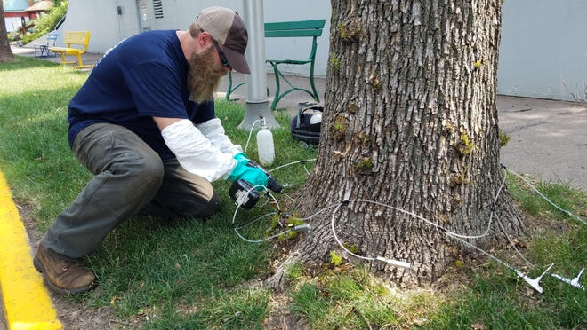 Paul Schoenike, a certified arborist with Rainbow Treecare, demonstrates on Aug. 2 the equipment they use to treat ash trees to prevent attacks from emerald ash borers on the State Fairgrounds in Falcon Heights.