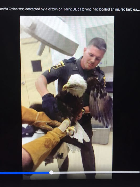 bald eagle Wicomico Sheriff.JPG
