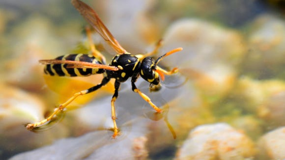 wasp on water